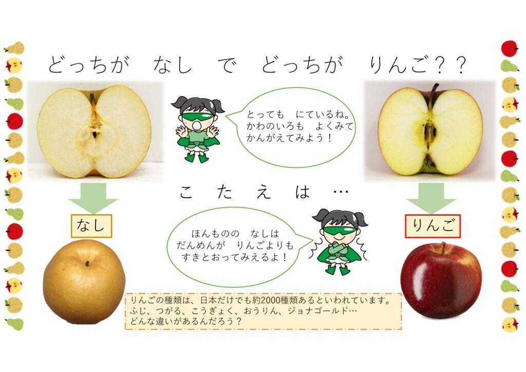 食育クイズ「どっちがりんご?」