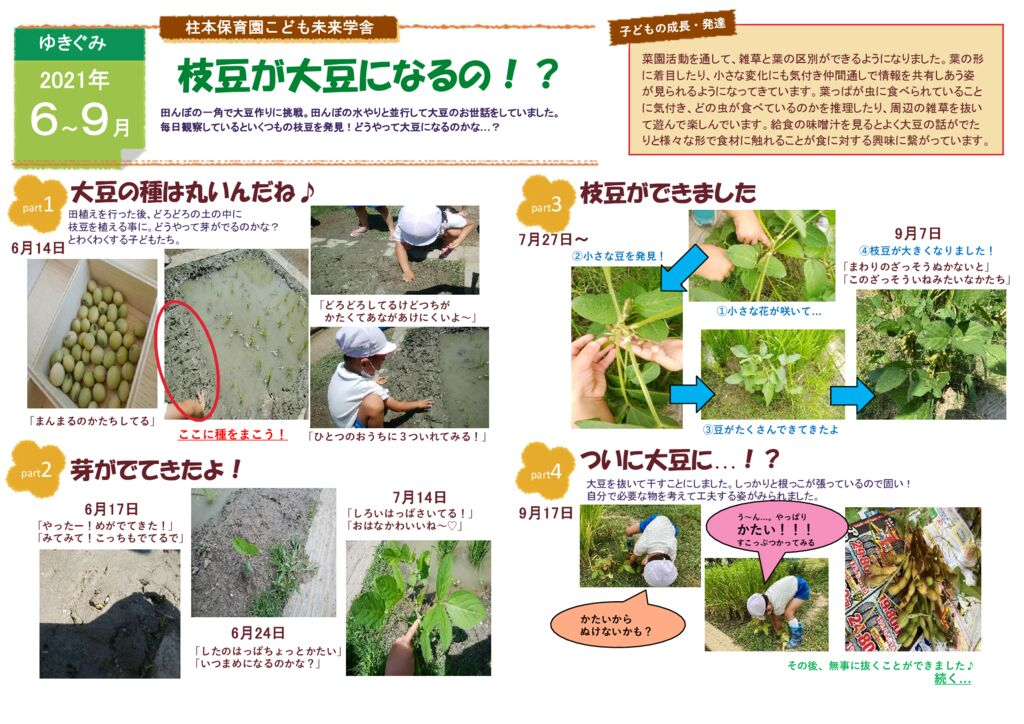 9月 ゆきぐみ 枝豆が大豆になるの?